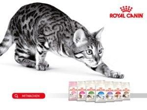 Royal Canin Wettbewerb Schweiz
