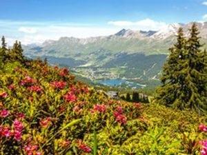 50 Plus Wettbewerb Schweiz