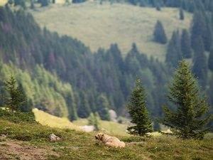 Arosa Bärenland Wettbewerb Schweiz
